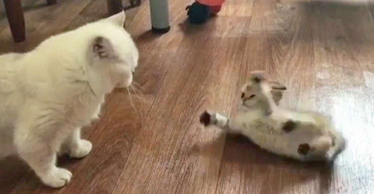 【くるりんコロコロ♪】ママ猫にアクロバティックな『ワザ』を見せる子猫ちゃんが可愛すぎたーッ♡