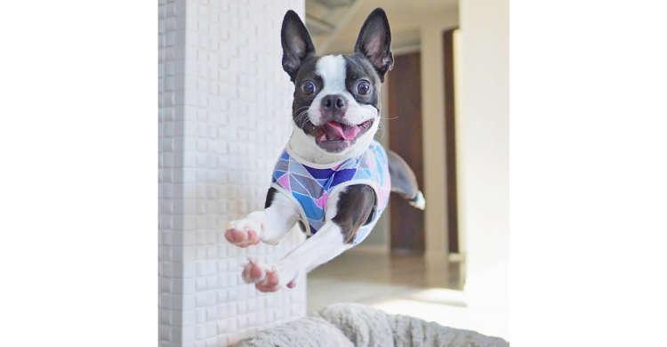 「ジャンプはお任せあれ!」楽しそうにぴょーんと跳び回るワンコさんに、心がウキウキする☆(8枚)