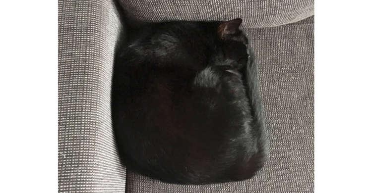 【未だかつてない形…】見事な■になってくつろぐ黒猫さんが、スゴすぎると話題に(`・ω・´)!