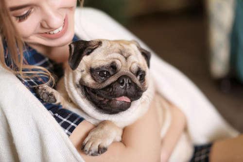 ペットを家族の一員として迎え共に暮らすことは、ヒトの心身の健康にすぐれた効果・効用をもたらすと言われており、近年「ペット飼育の健康効果」が注目されています。