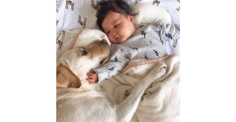【優しいベビーシッター】赤ちゃんを頑張って寝かしつけるワンコ♪ あったかい雰囲気に心なごむ。67秒