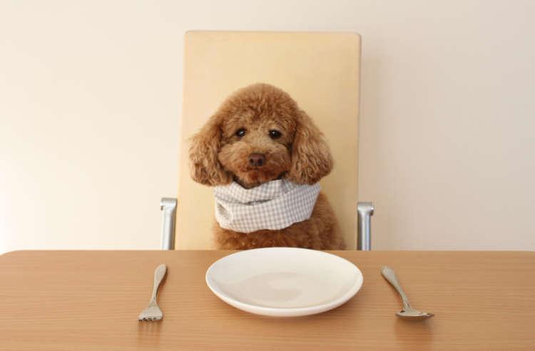 フードは毎日口にするものだから、栄養面も重視したいもの