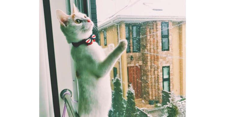 【空から何か降ってきた】初めて見る雪にキョロキョロくんかくんか。好奇心が止まらないニャンコさん♪