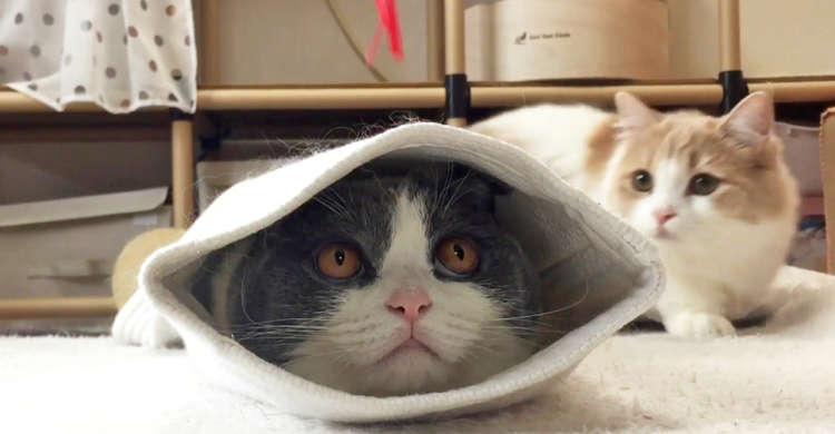 【猫踏んじゃった♪】袋に入りオモチャを見つめる猫 → でも後ろから別の肉球が近づいてきて…(笑)