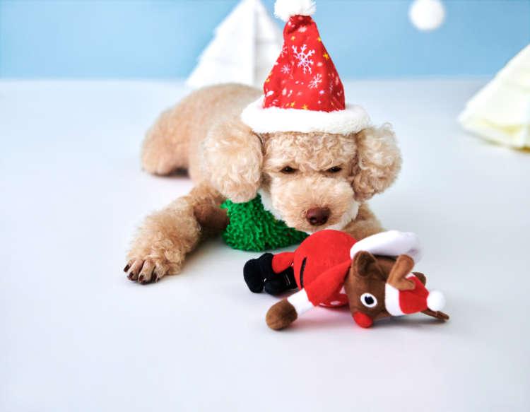PECOBOX(ペコボックス)『クリスマス号』受付中!愛犬が喜ぶギフトの中身を解説♪