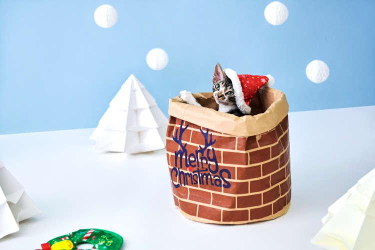 【愛猫用】PECOBOX(ペコボックス) 『クリスマス号』受付中!愛猫のプレゼントの中身を解説