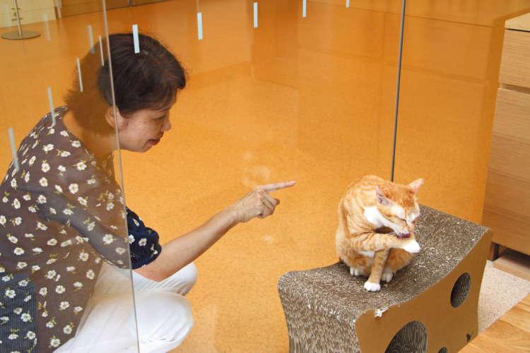 ガラス越しに猫とコミュニケーションもできる