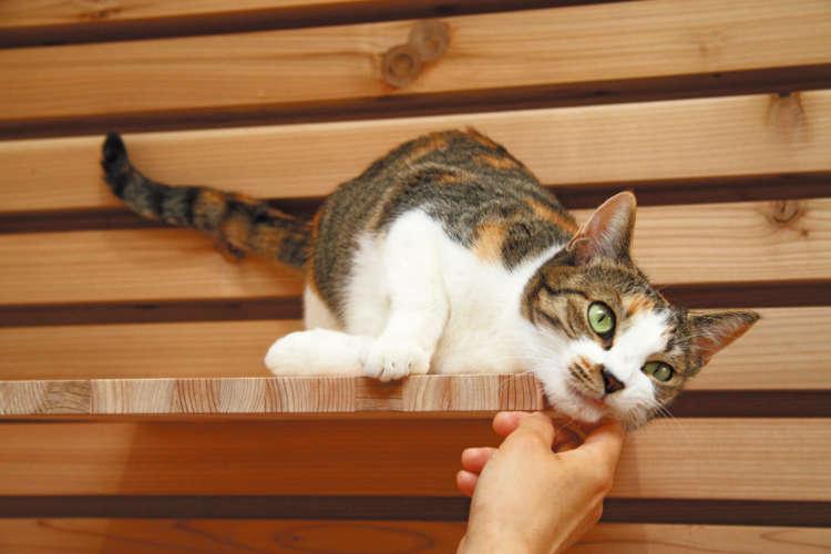 なんて人懐っこく可愛い保護猫なんだろう!