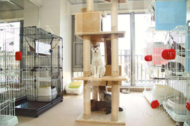 運動スペースも確保された明るい「猫室」