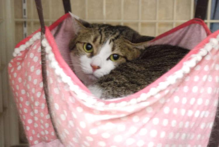 保護猫から銭湯の看板猫に昇格した茶々丸君【赤塚】