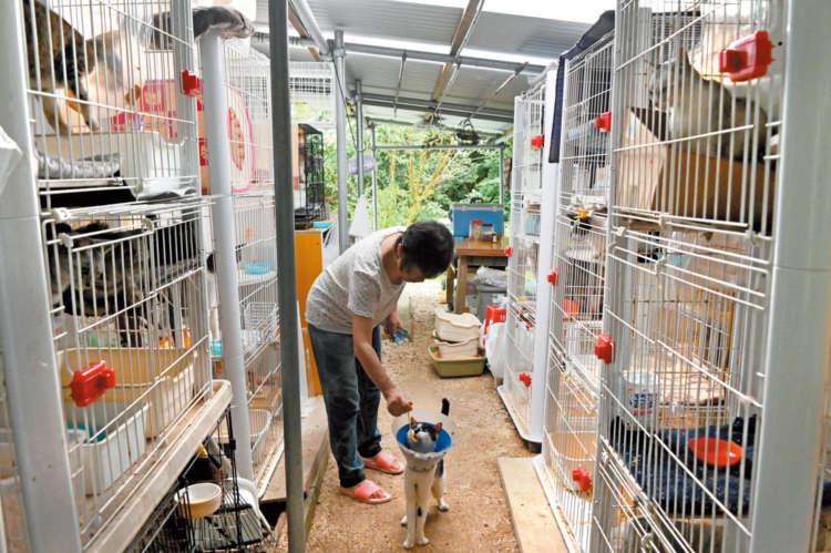 たくさんの猫雑貨と保護猫がいる石垣島の「にゃんこのしっぽ♪」【from Japan】