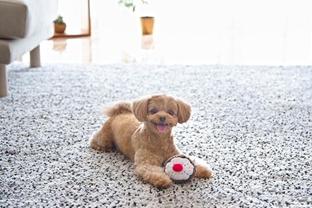【無料で試せる♪】愛犬の写真をもっと楽しむ方法、知っていますか?
