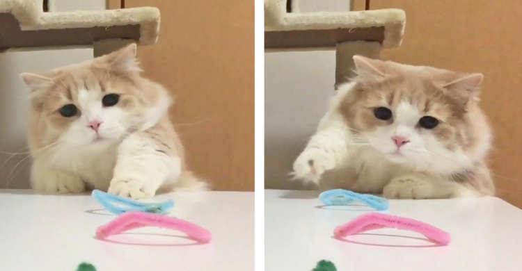 オモチャを取ろうと一生懸命な猫さん! ちょいちょいと何度も手を伸ばす様子がカワいかった♪