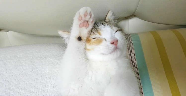 「眠いから撮らないでにゃ〜…」夢の世界まであと一歩。ニャンコの見せる愛らしい仕草にキュ〜ン。36秒