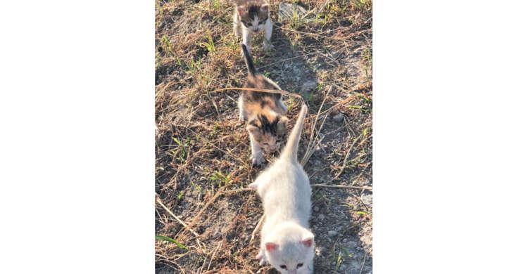 外でカラスに襲われている3匹の子猫を助けた結果 → 縦一列でついてきちゃった♡
