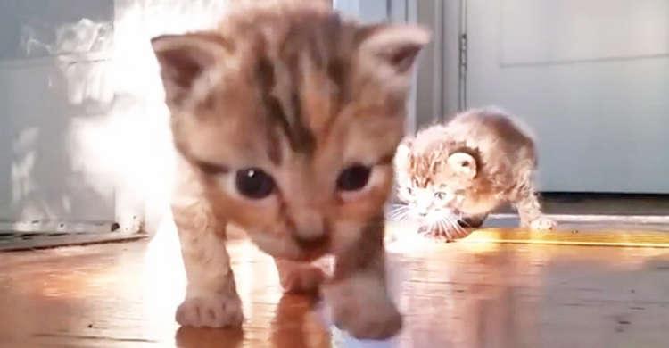 子猫たちがよちよち歩きで大冒険ッ! 一歩ずつゆ〜っくりと進む様子に、もうメロメロです(*´Д`*)