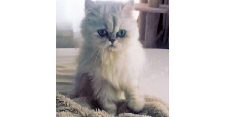 【ママを思い出しているの?】毛布をいつまでも、いつまでもフミフミする猫さんが愛らしかった(*´ェ`)