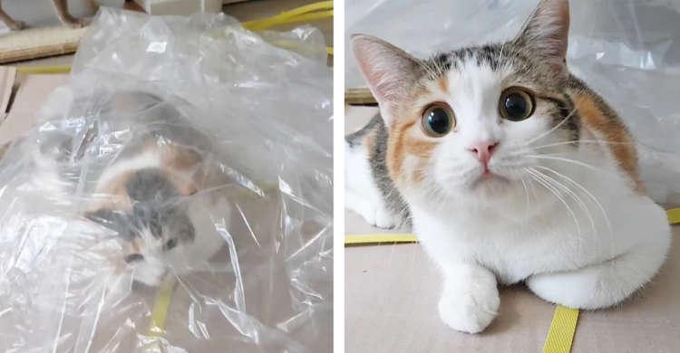 上手に「かくれんぼ」したと思った猫 → ビニールがめくられると、可愛いびっくり顔をしちゃう♪ 43秒