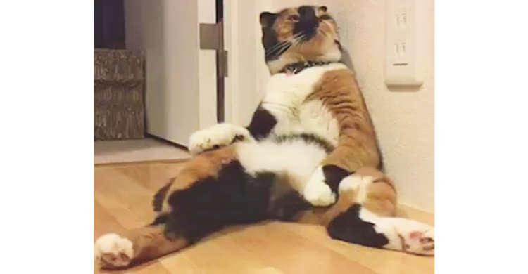 【背中にチャックがある疑惑】びろ〜んと大胆に足を広げてくつろぐ猫さんに、思わず笑っちゃう♪ 11秒