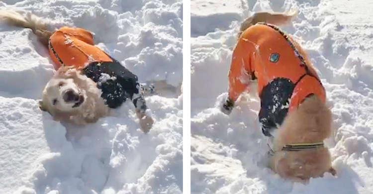 おじいちゃんワンコが雪の海にダイブ! バタバタしたり顔を突っ込んだりと、子どものように遊びまくる♪