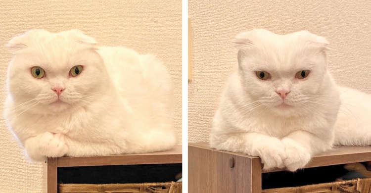【…え、誰?】ブラッシングで、ほほ毛を整えられすぎてしまったニャンコ。その結果 → …(笑)4枚