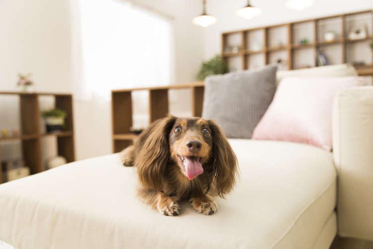 ペットのために家まで変える? 注目の「ペットリハウス」を人気ドッグトレーナーと考える