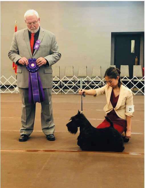 Scottish Terrier Club Of AmericaのSpecialty
