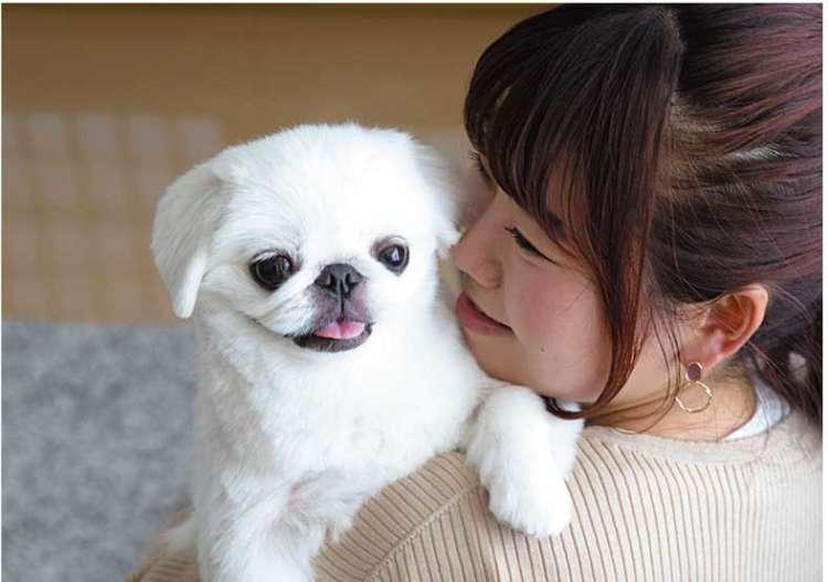 【3つのCaseから分析する】飼い主の「キモチ」、犬の「ホンネ」Case 3