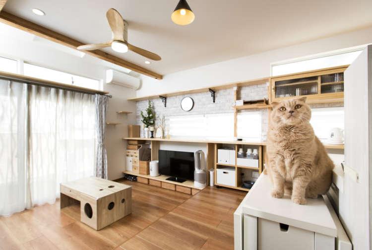 「愛猫のためにペットリハウスしました!」ペット愛溢れるキャットオーナーのご自宅がスゴかった…!