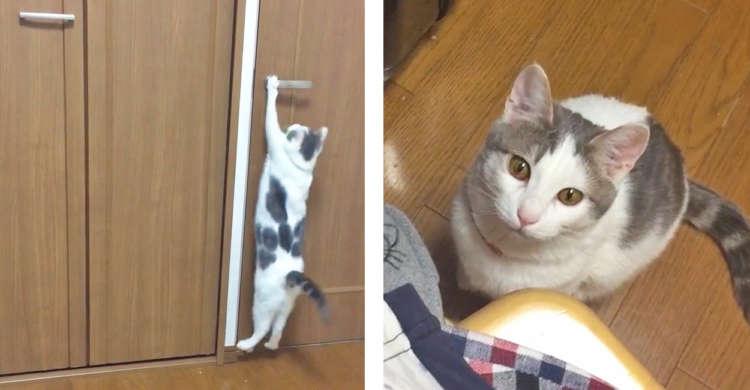 【最後はおねだり攻撃♡】飛びついてドアを開けようとする猫さん! → うまくいかないと分かると…。