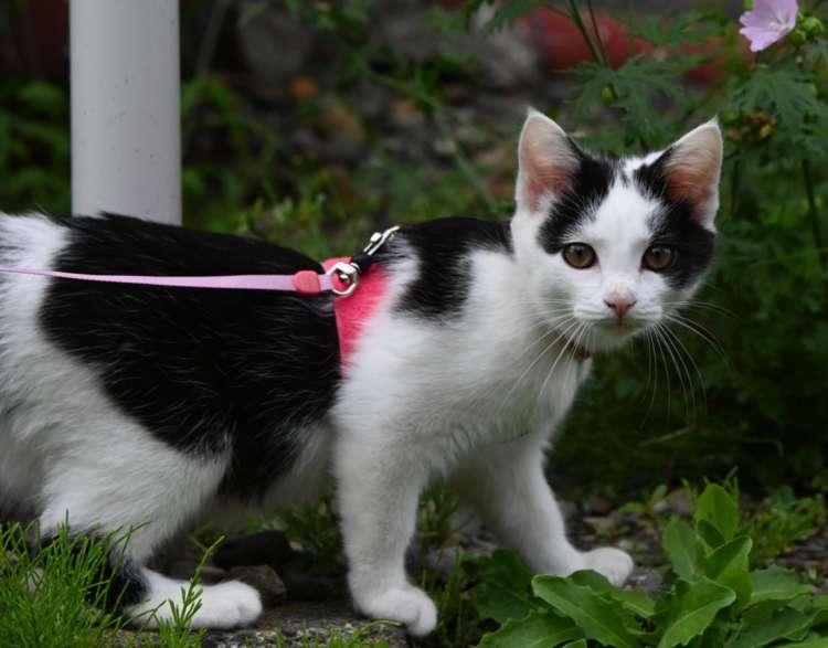 【猫びより】フェリーターミナルの癒し猫【天売島】(辰巳出版)