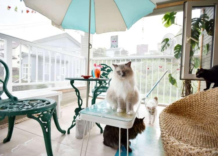 風通しの良いバルコニーは先輩猫チャーリーもお気に入り