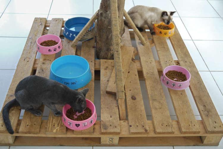 バーンメオの猫たちのフードはヒルズのみ