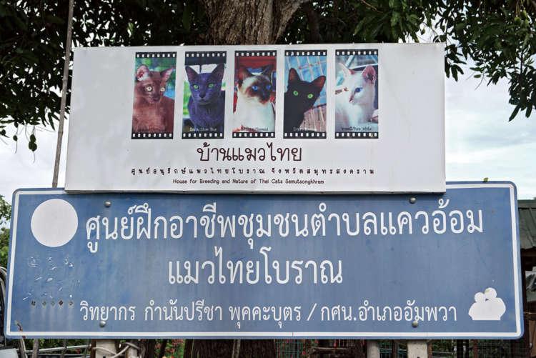 タイ原産猫5種の紹介
