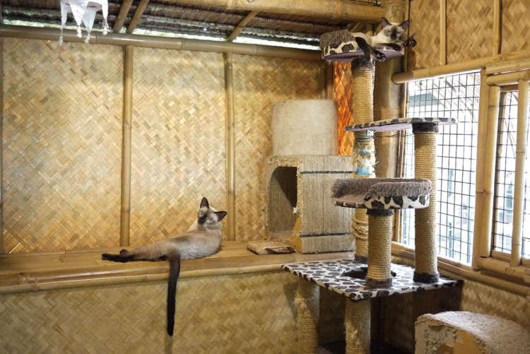 接客係は9匹のシャム猫たち