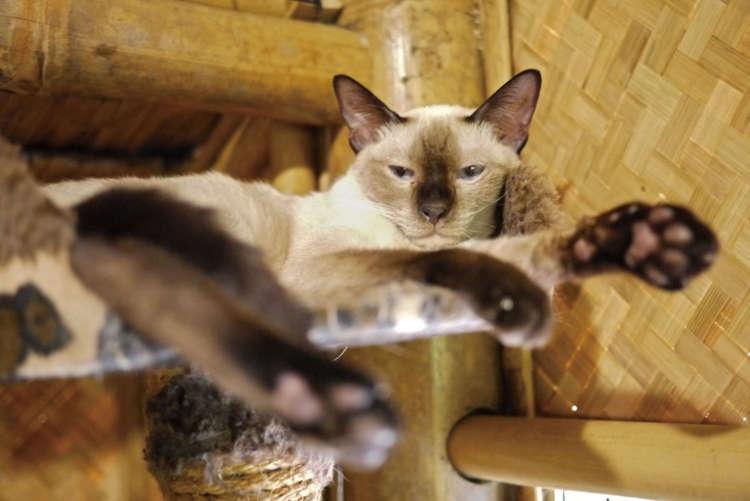 猫愛が繋ぐ2つの「猫の家(バーンメオ)」【from Thailand】