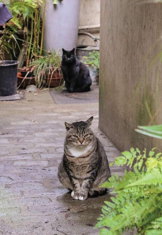猫を守るのは管理人さんたちの裁量。管理人室では雨風や寒さを凌げます