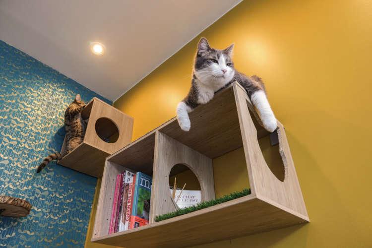 明るい店内で、猫同士の相性も〇。