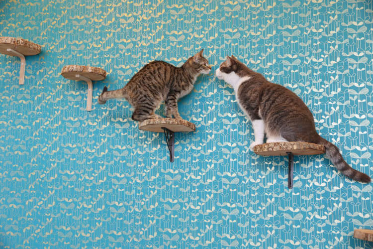 オープン約1年半で、72匹の猫に里親が見つかりました