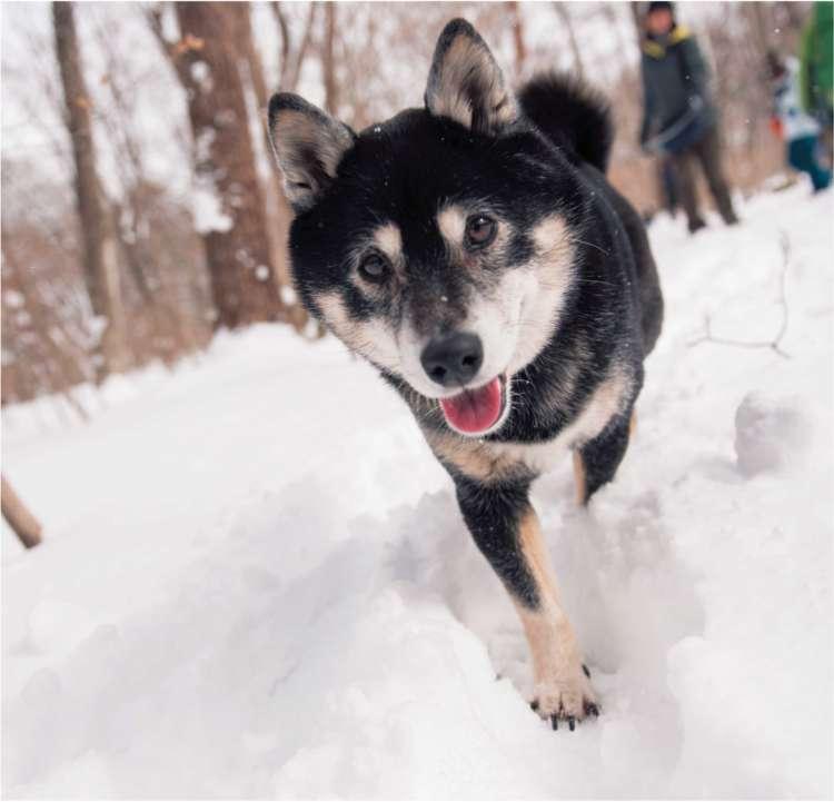 愛犬が元気になる♥ Winter Tripに出かけてみませんか?その1