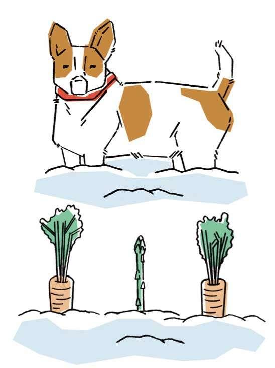 小型犬や子犬、シニア犬の場合は