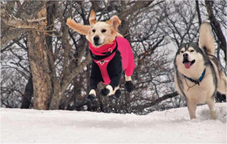 愛犬と飼い主が互いに成長できる冬の山遊び