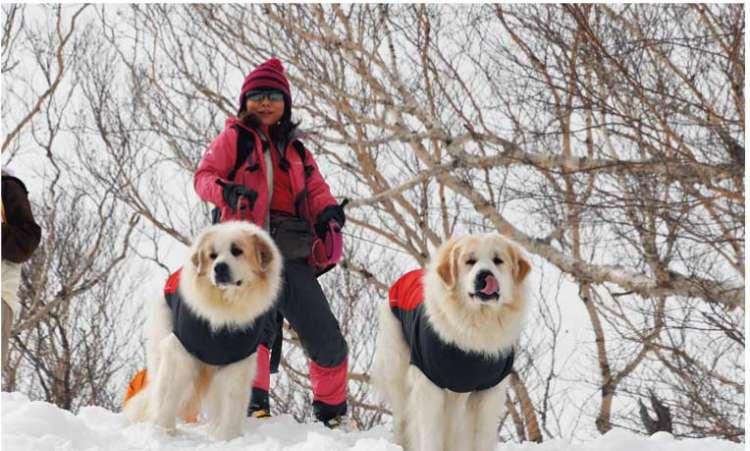 場合によっては、愛犬にも防寒対策を