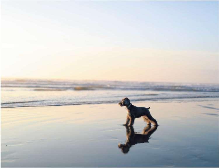 気温の低い冬こそが犬にとって心地よい海の季節
