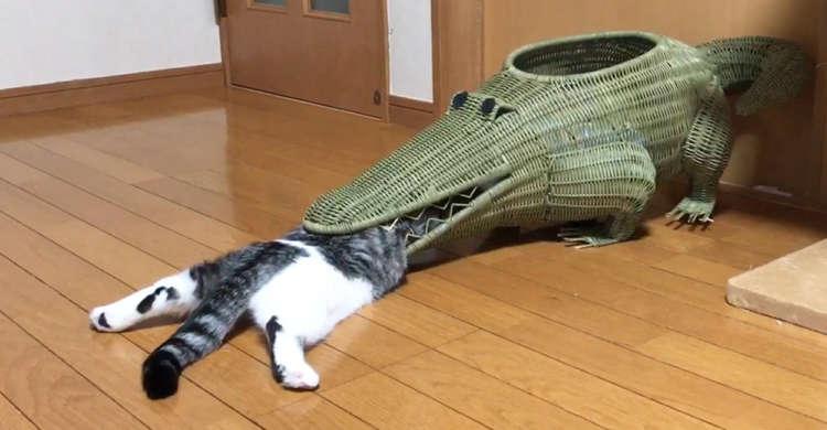 【なんでそこから!?】ワニ型のカゴにど〜しても入りたい猫さん。果たしてその結果は…(ΦωΦ)?