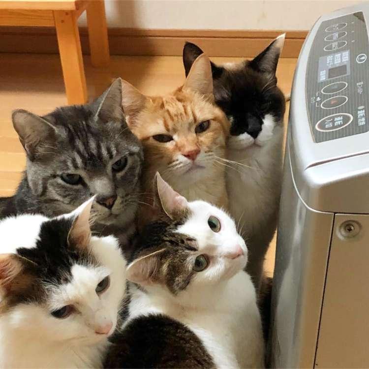動物,犬,猫,しつけ,飼い方,育て方,病気,健康