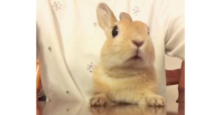 みんなの会話に興味津々♪ お鼻をヒクヒクさせながら気にするウサギさん(*´×`*)♡ 33秒