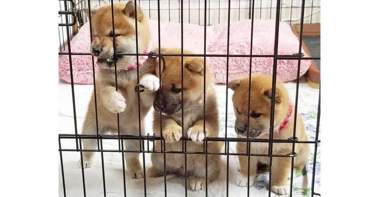 【もふもふ速報】今にも脱獄しそうな様子を見せる、3匹の凶悪犯が現れましたッ…!!