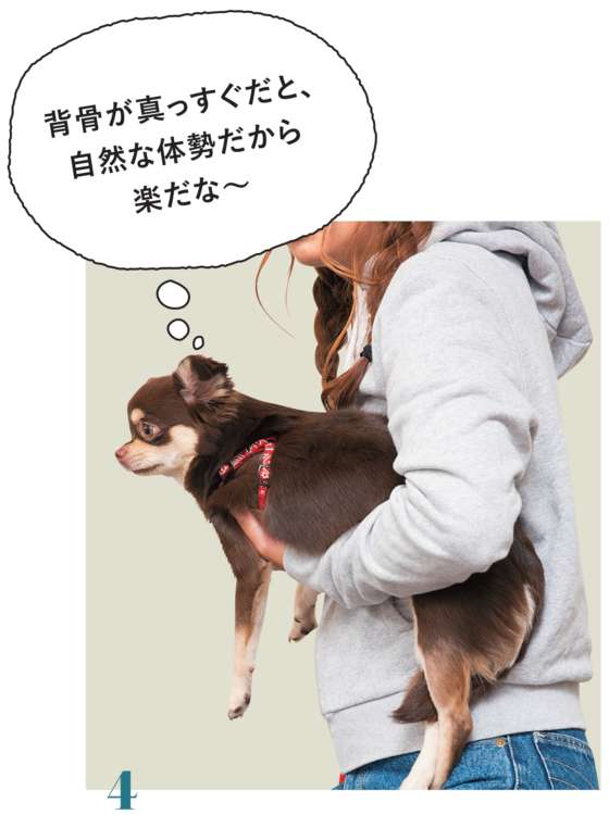 持ち上げた際に、肘で愛犬の骨盤をしっかり押さえ、自分の脇腹や腰に寄せて固定します。また、愛犬の背骨が真っすぐになるように、胸に添えた手で調整しましょう