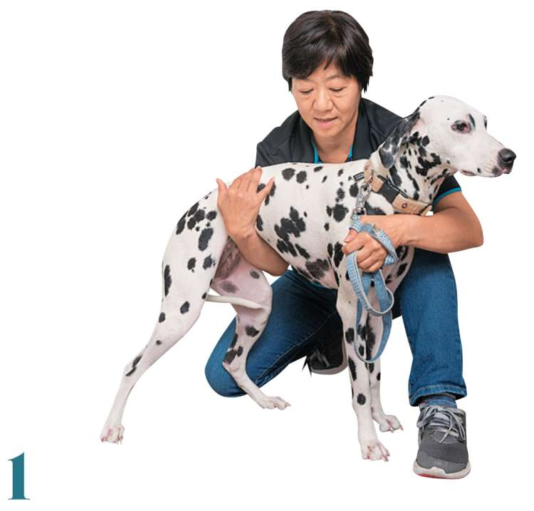 犬に対して横向きにしゃがみ、腰の部分を支えます。おなかを圧迫しないよう、足に近い場所に腕を置きましょう